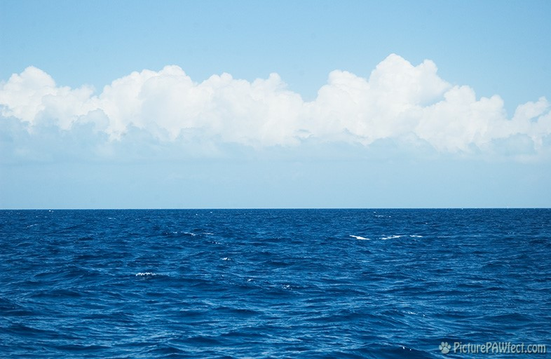 The Atlantic Ocean (Sailing the British Virgin Islands)