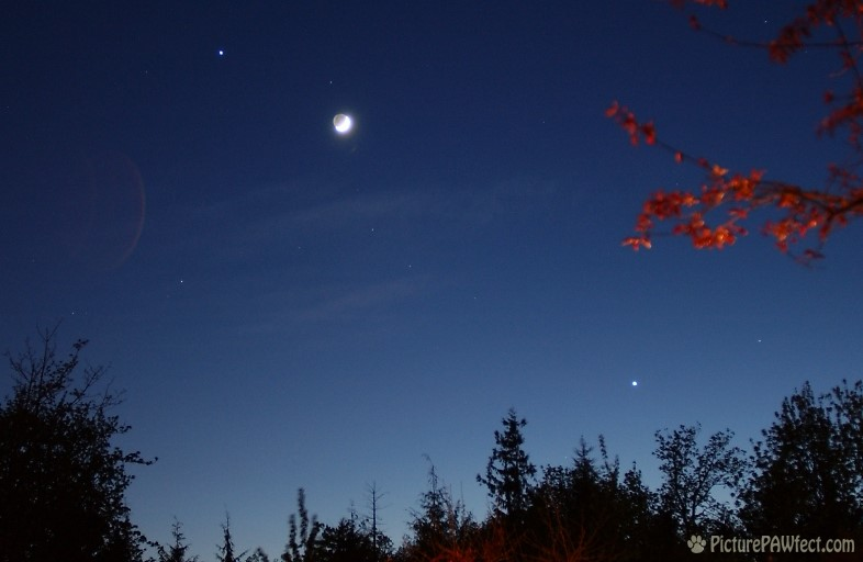 The Moon and Crescent Venus (Sky & Space Gallery)