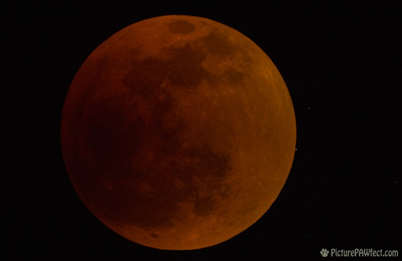 Total Lunar Eclipse (with star about to eclipse) (Sky & Space Gallery)