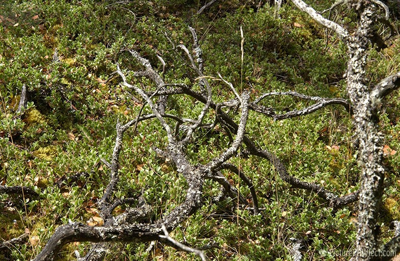 Gnarly Branches (Textures)