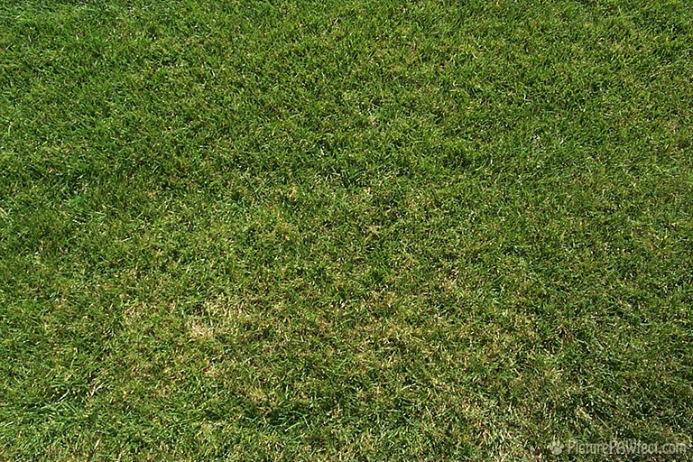 Lawn (Textures)